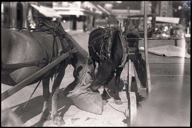 hester i Drammen tidlig på 1930-tallet